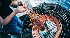 Rock Lobster Lessons